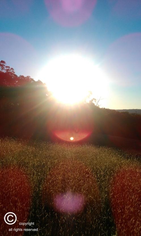 Wagga Wagga Sunset
